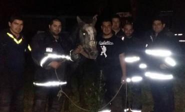 Bomberos rescatan con vida a un caballo