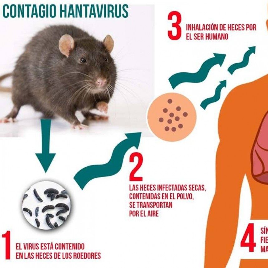 No descartan un posible caso de Hantavirus