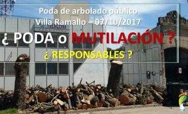 Ramallo - poda y tala indiscriminada de árboles públicos