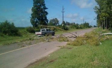 Cayó un árbol en Acceso Maiztegui