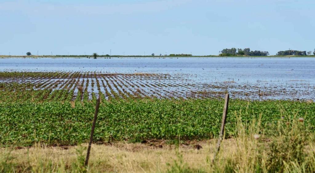 Soja: preocupa la cantidad de agua caída