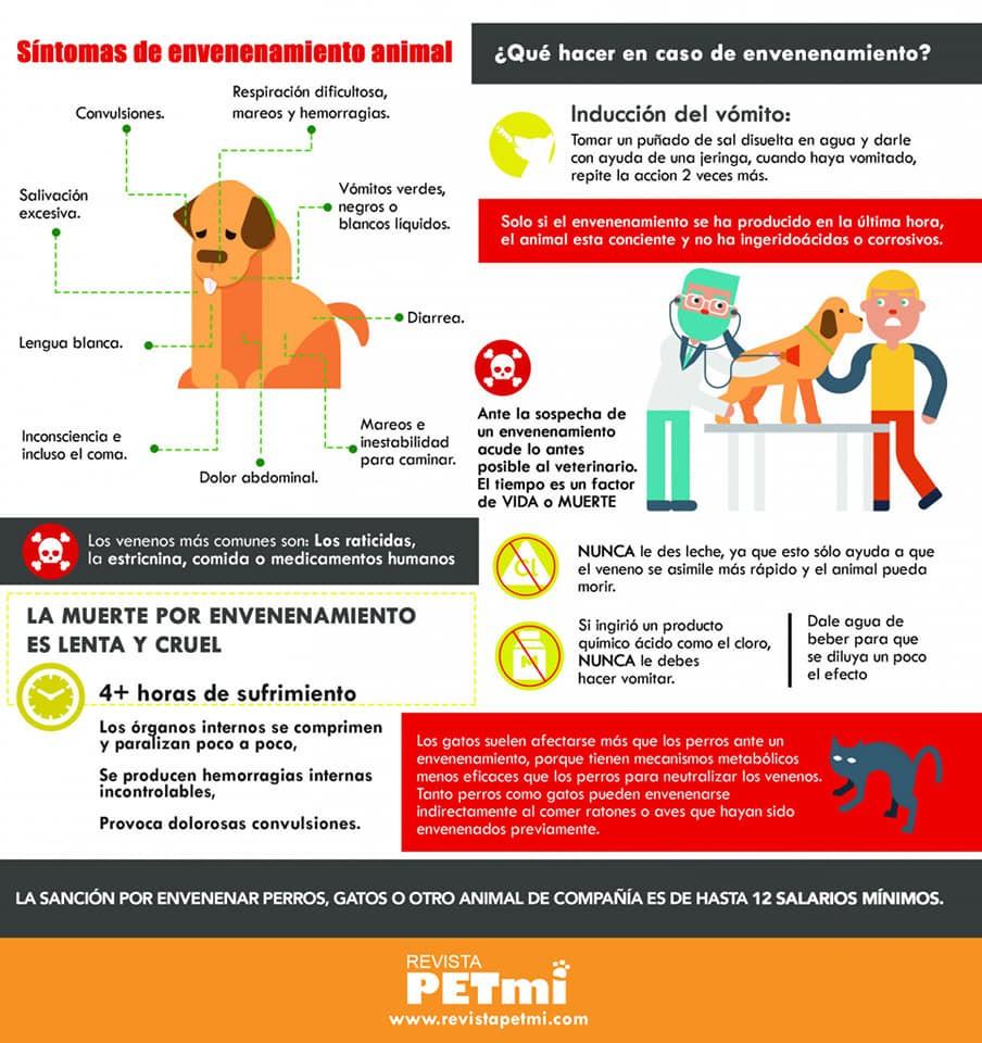 Terrible: envenenaron perros