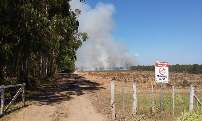 Intenso trabajo de bomberos para controlar un incendio en un campo