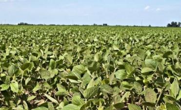 54,5 M t de soja y 36,5 M t de maíz para el ciclo 2016/17