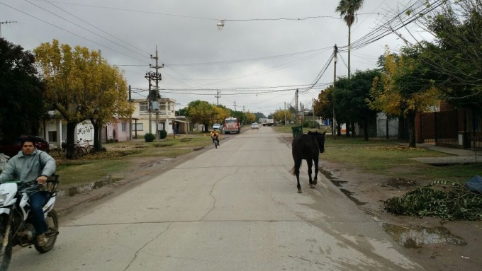 Ramallo: Un caballo suelto en plena calle Leloir