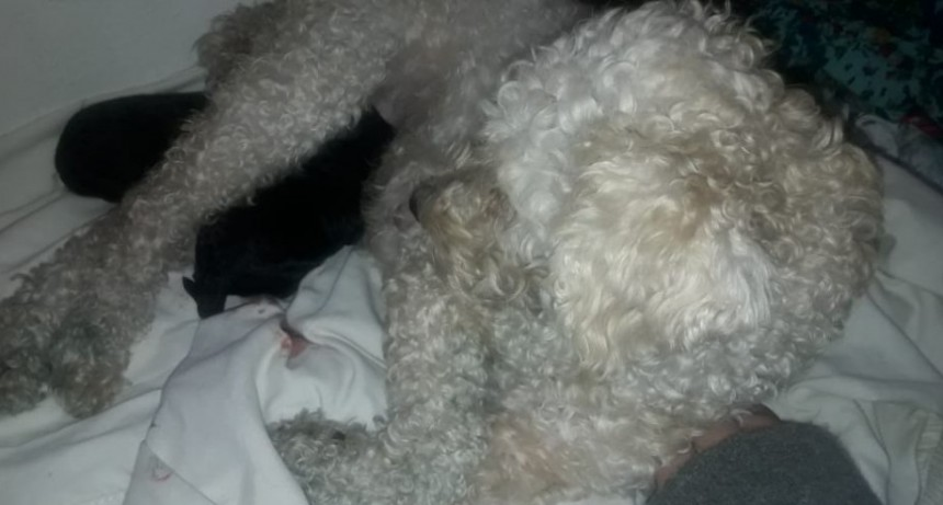 Historias en cuarentena: Dorys apareció junto a dos cachorritos...