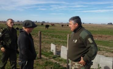 Robaron 12 vacas en Rueda, y recuperan 10 en Ramallo