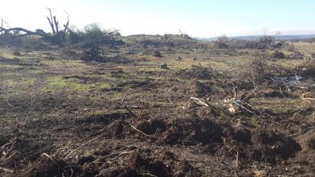 Denuncian tala de Bosques Nativos en Ramallo