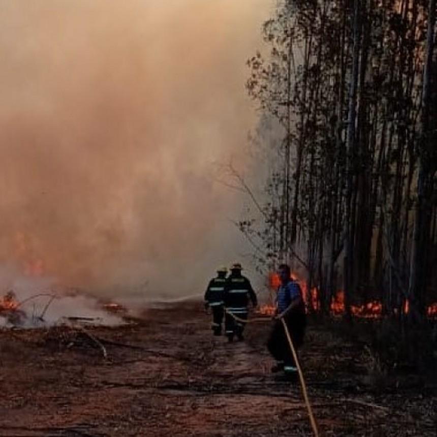 Intensa actividad de bomberos combatiendo incendio forestales