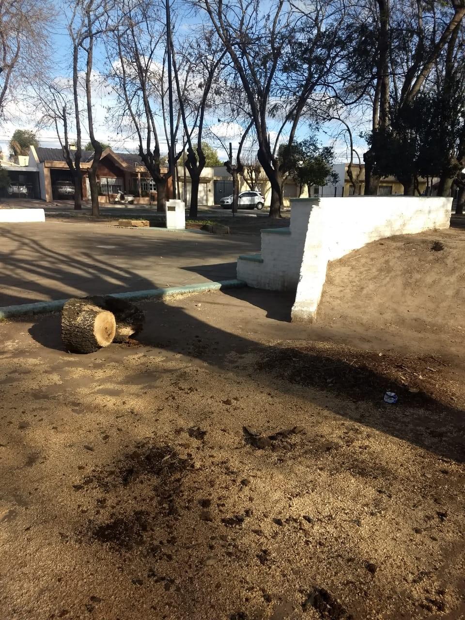 El delegado municipal de Villa Ramallo informó sobre la decisión de sacar árboles en la plaza y en la estación