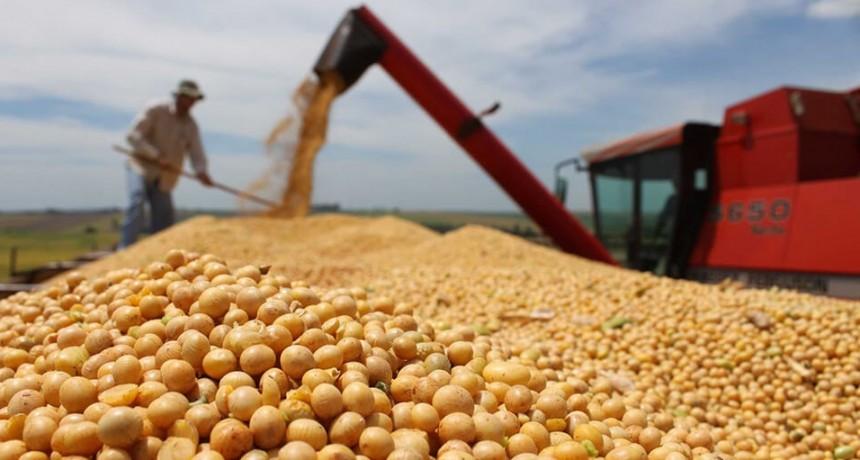Sube el precio de la soja pero en la región no llueve