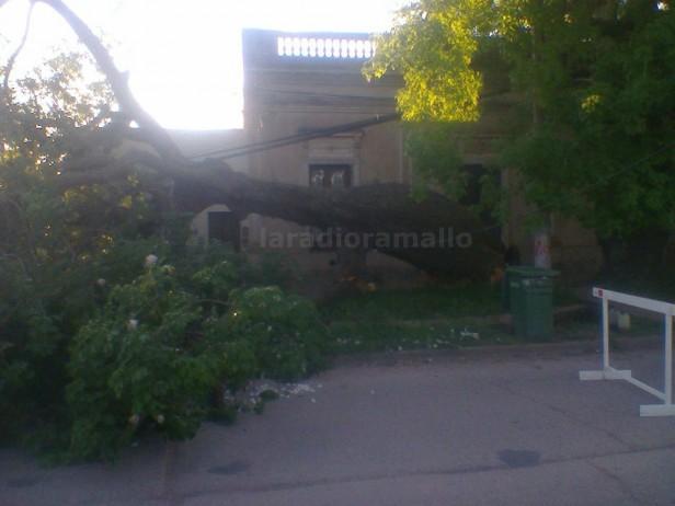 Cayó un árbol en Villa Ramallo