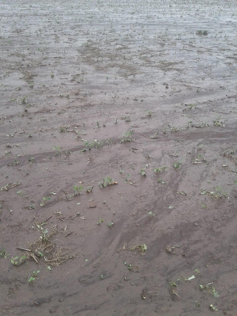 La tormenta destruyó parte de los cultivos