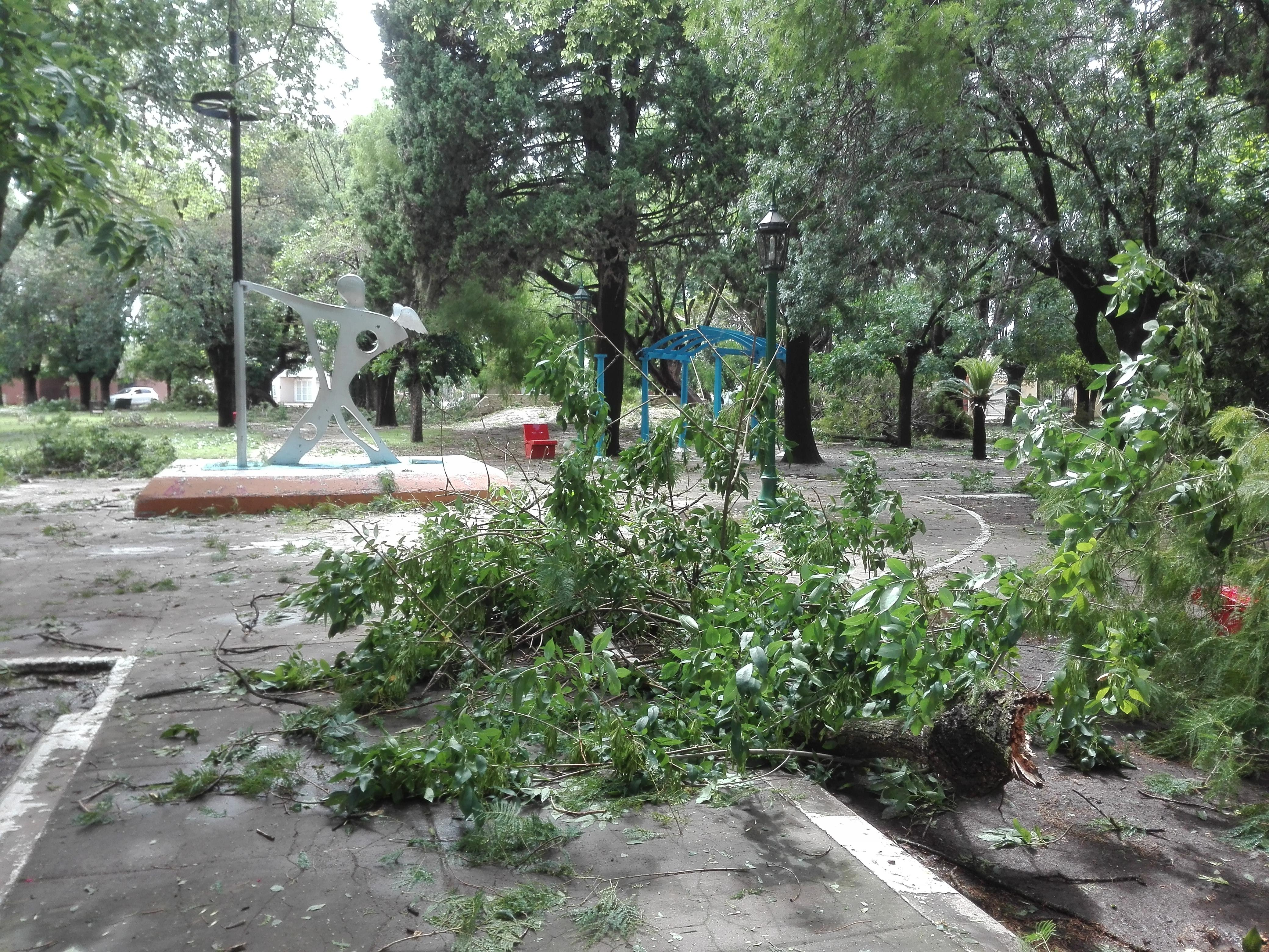 En la plaza Belgrano de Villa Ramallo destrozó gran parte de los arboles