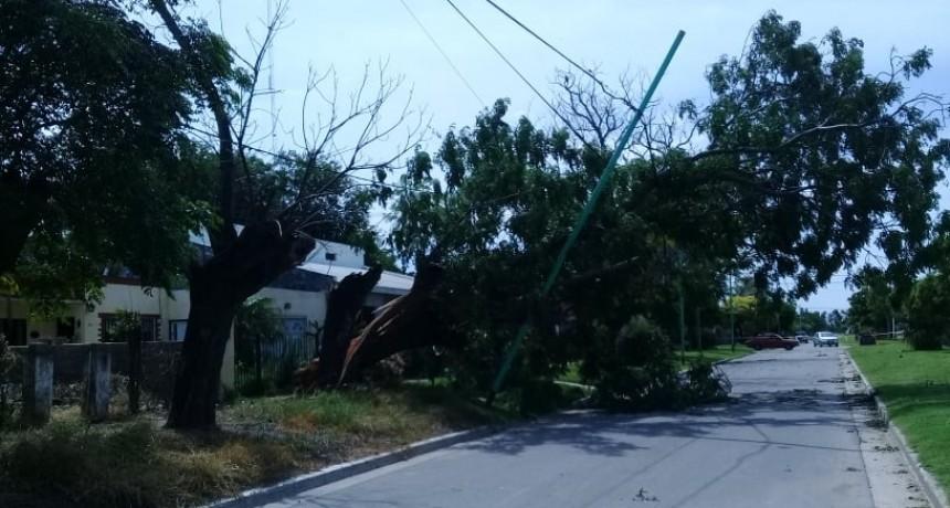 La tormenta de la madrugada causó importantes daños