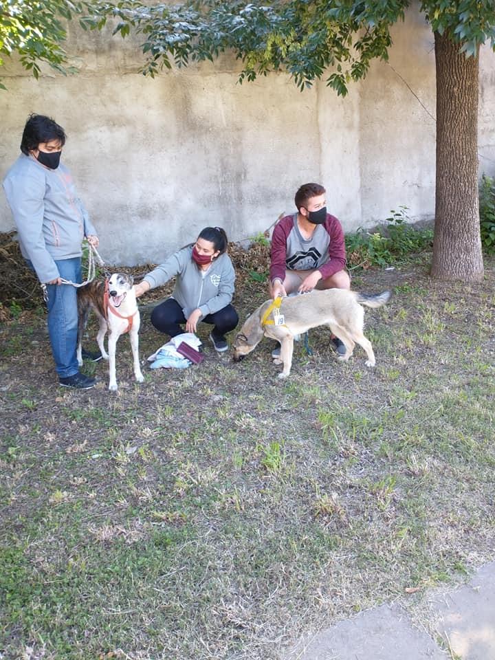 ONG Animales Ramallo