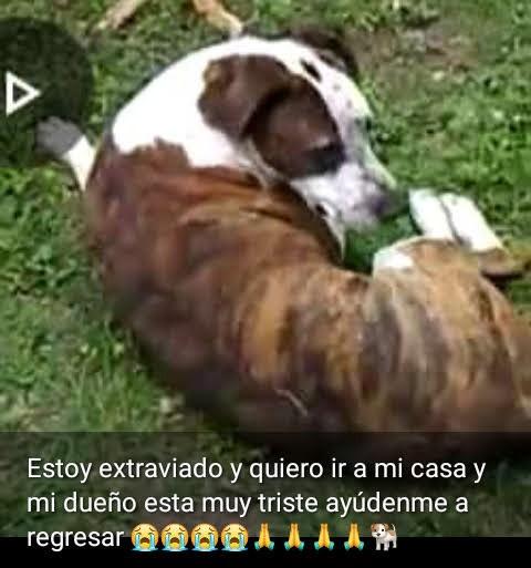 Piden ayuda para recuperar a sus perros